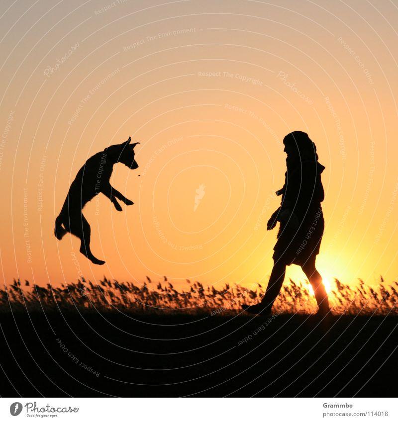 Woman Sky Sun Red Joy Jump Grass Dog Flying Aviation Sunset Human being Dusk Dog food