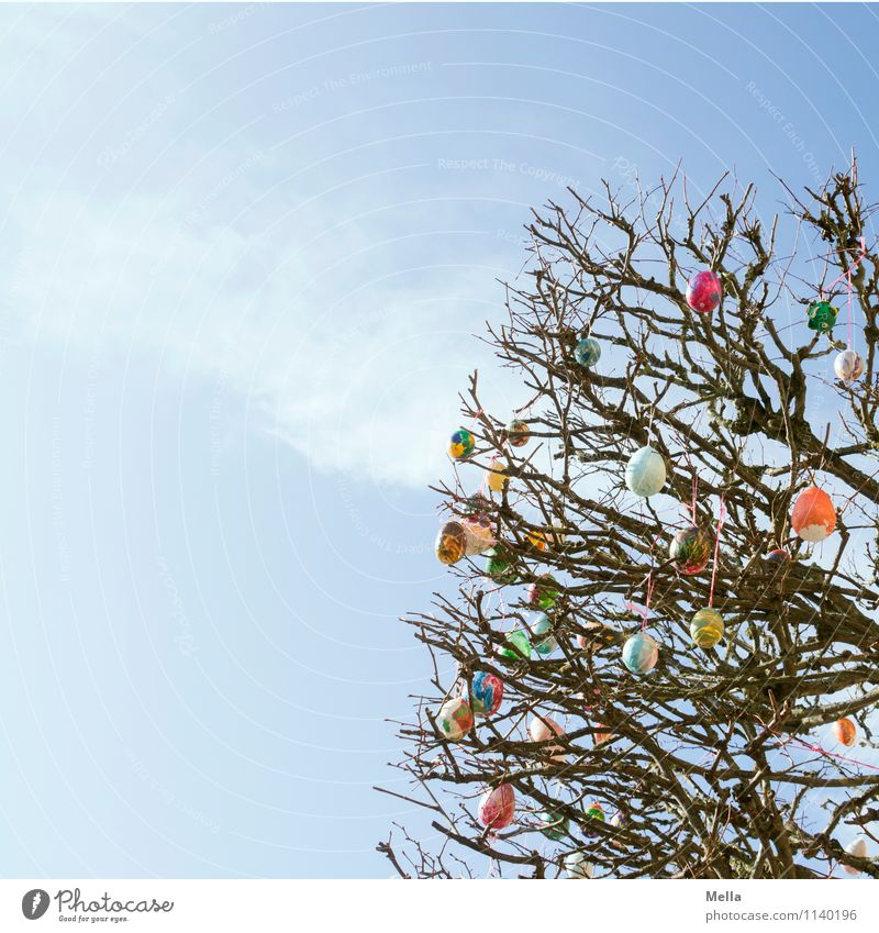 Happy Easter! Environment Nature Sky Spring Plant Tree Branch Decoration Kitsch Odds and ends Egg Easter egg Sign Hang Tall Small Above Blue Multicoloured Moody