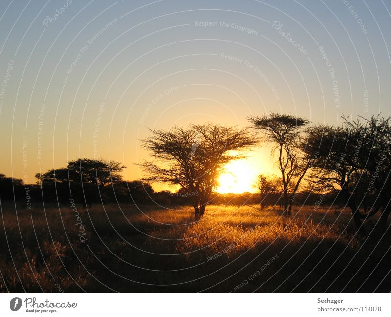 Sunset in Namibia Savannah Tree Vacation & Travel Steppe Africa Safari Romance