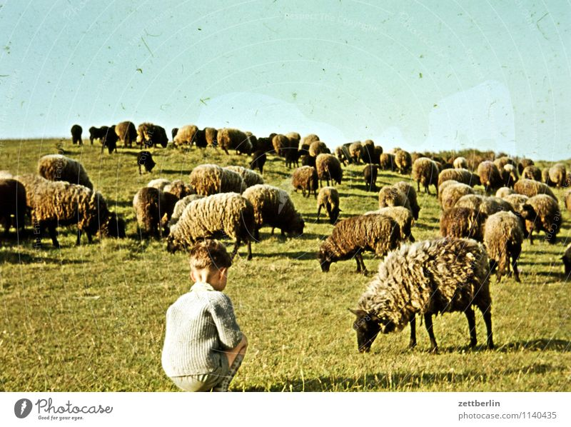 Dornbusch, 1966 Child Boy (child) Vacation & Travel Travel photography Landscape Hill Horizon Sky Former Infancy Childhood memory Youth (Young adults) Past
