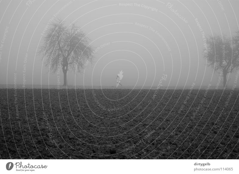 Fog Sports Jogging Field Tree Autumn Dark Gray Black & white photo B/W B&W Nature