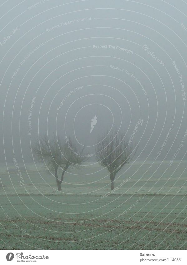 Nature Tree Autumn Meadow 2 Together Fog Rope Closed Grief Gloomy Distress November Leafless