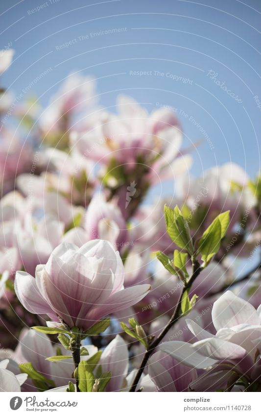 Nature Beautiful Tree Relaxation Leaf Calm Life Spring Blossom Pink Contentment Blossoming Wellness Pure Well-being Fragrance