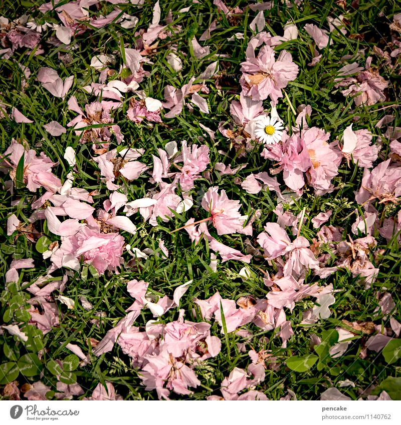 Weather's raining. Nature Plant Elements Earth Spring Grass Blossom Garden Park Meadow Sign Beautiful Natural Feminine Green Pink Chaos Life Ease Dream Daisy
