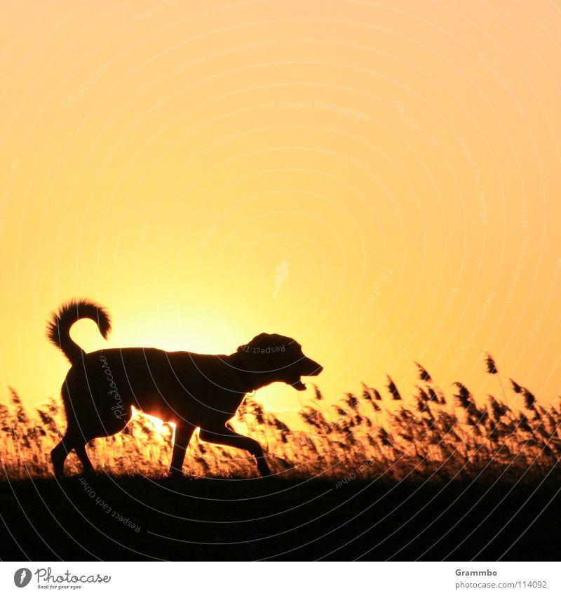 Sky Sun Grass Dog Mammal Dusk