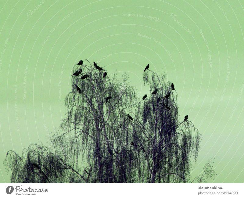 Sky Tree Bird Fear Dangerous Branch Creepy Panic Raven birds Excessive