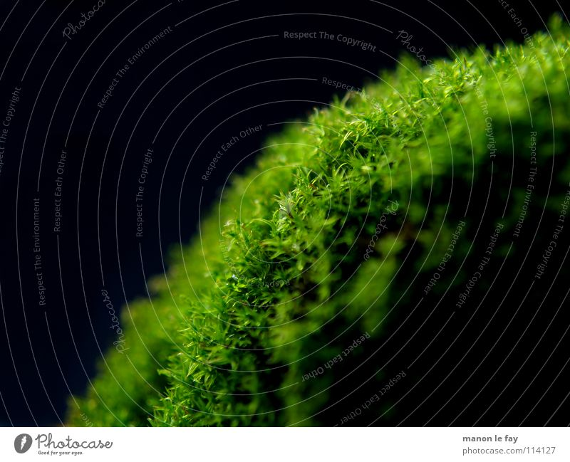 Nature Green Black Autumn Hair and hairstyles Background picture Soft Near