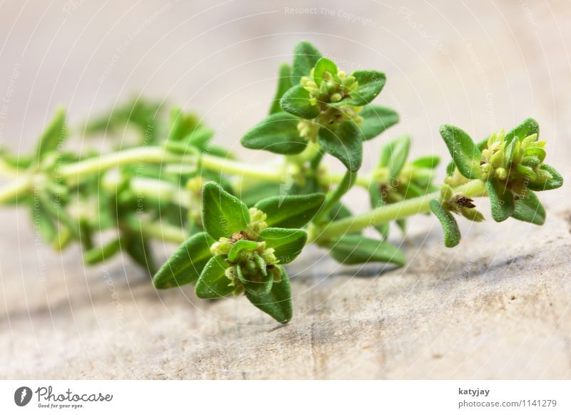 oregano Oregano Thyme Herbs and spices Plant Aromatic Detail Nutrition Italy Italian Food Healthy Eating Green Alternative medicine Near Close-up