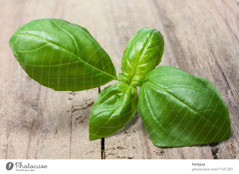 basil Basil Healthy Eating Dish Food photograph Fresh Sense of taste Herbs and spices Green Background picture Culinary Kitchen Leaf Delicious Italian Food