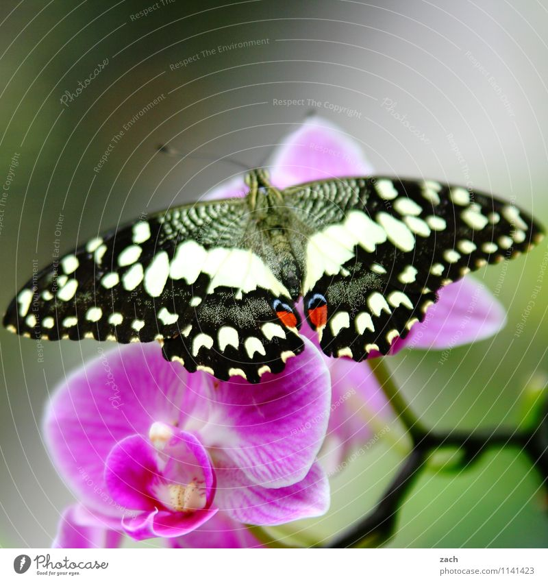 unfolded Spring Summer Plant Flower Orchid Leaf Blossom Exotic Animal Wild animal Butterfly 1 Flying Green Pink Colour photo Exterior shot Deserted