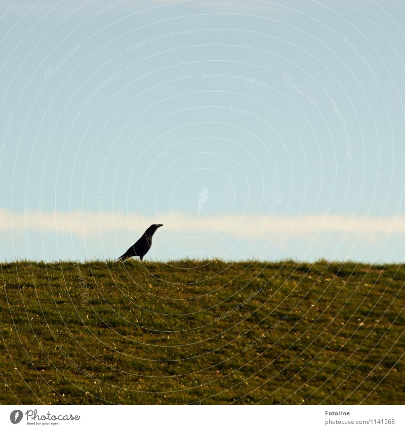 PROUD! Environment Nature Plant Animal Sky Cloudless sky Clouds Beautiful weather Grass Meadow Wild animal Bird 1 Bright Natural Blue Green Black White