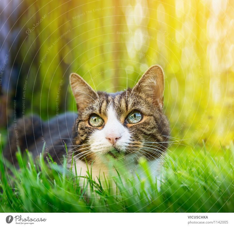 Cat in summer garden Lifestyle Summer Garden Nature Spring Beautiful weather Park Animal 1 Yellow Background picture Grass Green Hunting Gray Eyes Free-roaming