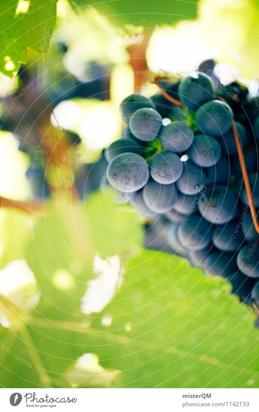 Art Esthetic Vine Wine Grape harvest Vineyard Wine growing Bunch of grapes Perspective Vine leaf Winery Grape juice