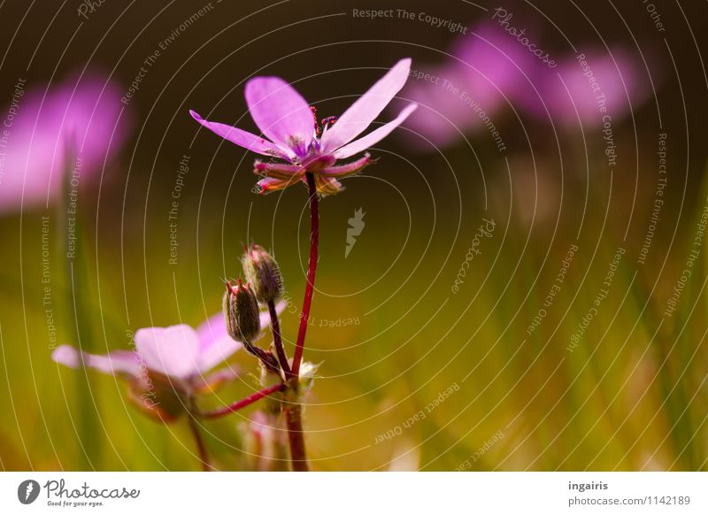 Spring in the meadow ground Nature Landscape Plant Flower Grass Blossom Meadow Blossoming Illuminate Growth Fresh Small Natural Green Violet Pink Red Moody