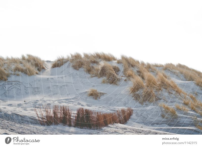 Against the grain Nature Landscape Plant Climate Weather Wind Wild plant Beach Bay North Sea Baltic Sea Observe Dream Faded Esthetic Happiness Maritime Yellow
