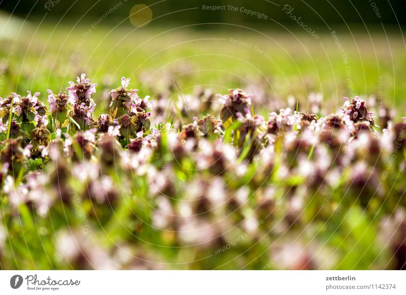 Nature Flower Far-off places Blossom Spring Meadow Grass Background picture Garden Horizon Copy Space Blossoming Lawn Depth of field Pasture Garden plot