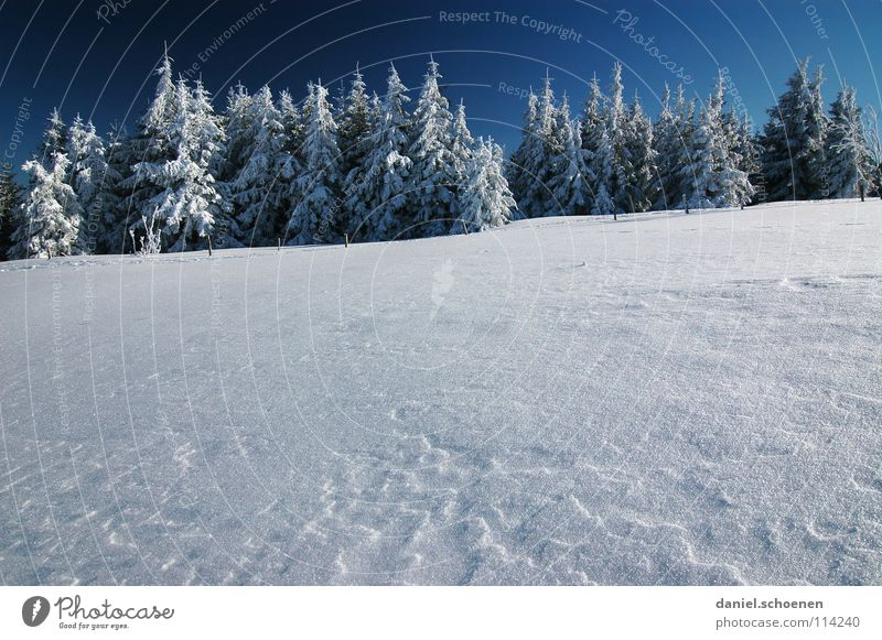 Christmas card 20 Winter Black Forest White Fir tree Coniferous forest Deep snow Hiking Leisure and hobbies Vacation & Travel Jinxed Mystic Abstract