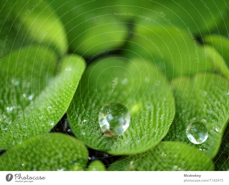 droplets Environment Nature Plant Water Drops of water Spring Beautiful weather Leaf Foliage plant Wild plant Exotic Garden Park Pond Fluid Cold Wet Natural