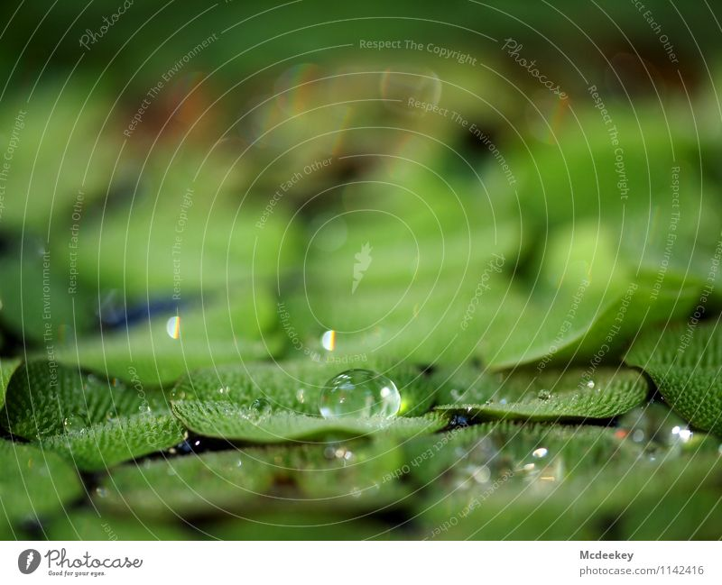 droplet Environment Nature Plant Water Drops of water Spring Beautiful weather Leaf Foliage plant Wild plant Exotic Garden Park Fluid Cold Wet Natural Round