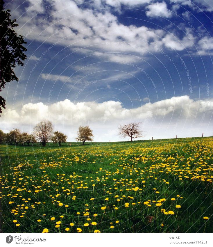 Sky Nature Plant Blue Green Tree Relaxation Landscape Clouds Far-off places Environment Yellow Blossom Spring Grass Healthy
