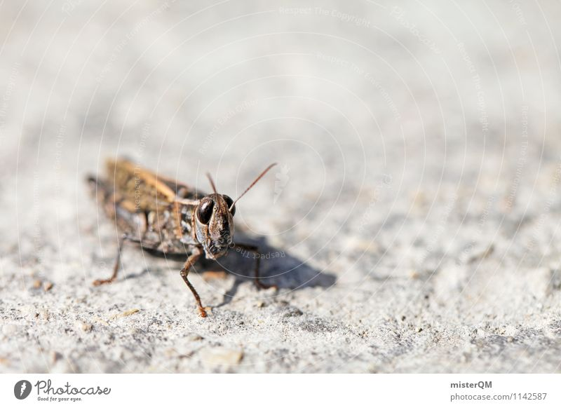Mr. Hopper. Animal Contentment Insect Insect repellent Locust Dryland grasshopper Macro (Extreme close-up) Colour photo Subdued colour Exterior shot Close-up