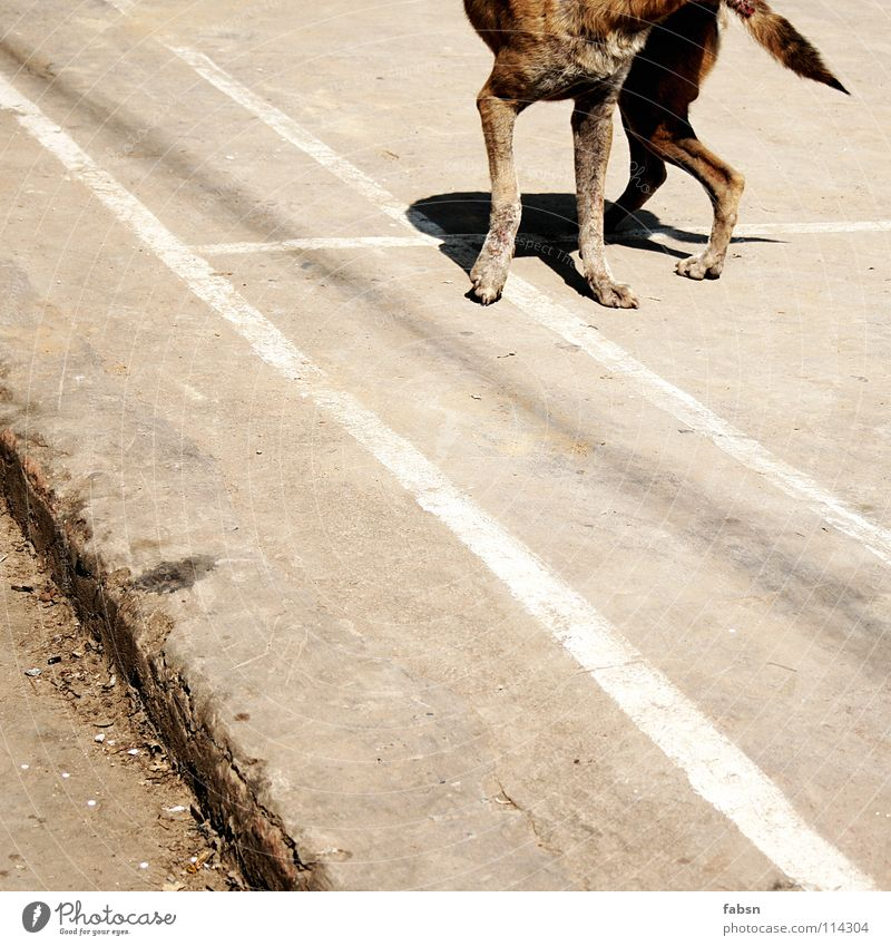 CUT THE DOG Dog Crossbreed Animal Places Summer Asia Transience Street dog promenade mix befallen infestation court
