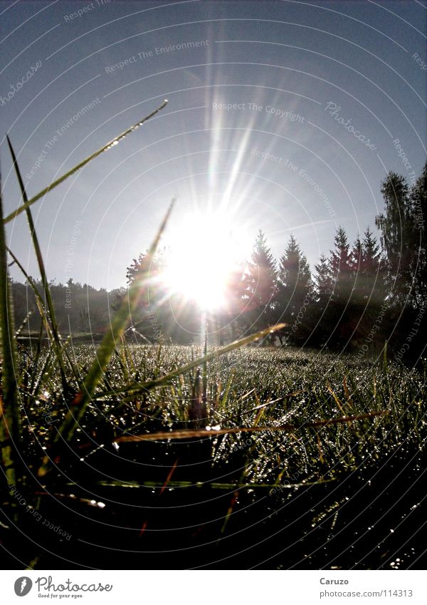 Morning sun3 Sunbeam Grass Light Dazzle Blade of grass Radiation Celestial bodies and the universe Peace Bright Siegwinden Floor covering Sky