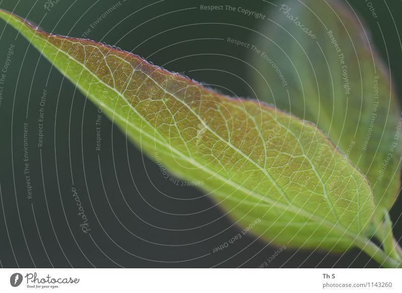 Nature Plant Beautiful Green Colour Leaf Calm Spring Natural Design Illuminate Fresh Elegant Authentic Energy Esthetic