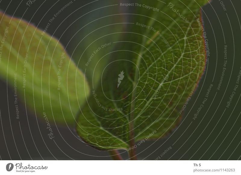 Nature Plant Beautiful Green Colour Leaf Calm Movement Spring Natural Design Fresh Elegant Authentic Energy Esthetic