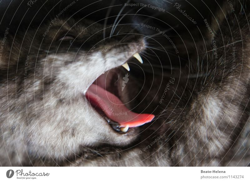tender cat's tongue Fur coat Cat Animal face Breathe Aggression Threat Creepy Gray Pink Emotions Spring fever Power Indifferent Voluptuousness Effort Passion