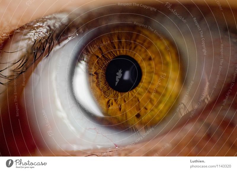 macro eye Eyes Observe Watching TV Looking Aggression Threat Disgust Creepy Natural Round Slimy Brown Yellow Emotions Desire Watchfulness Surprise Fear Horror