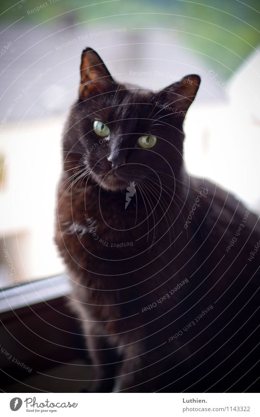 window cat Elegant Well-being Contentment Relaxation Calm Meditation Living or residing Black-haired Short-haired Animal Pet Cat 1 Observe To enjoy Esthetic