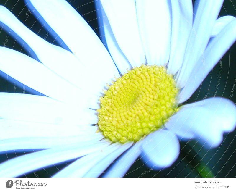white flower *3 Flower Plant White Green