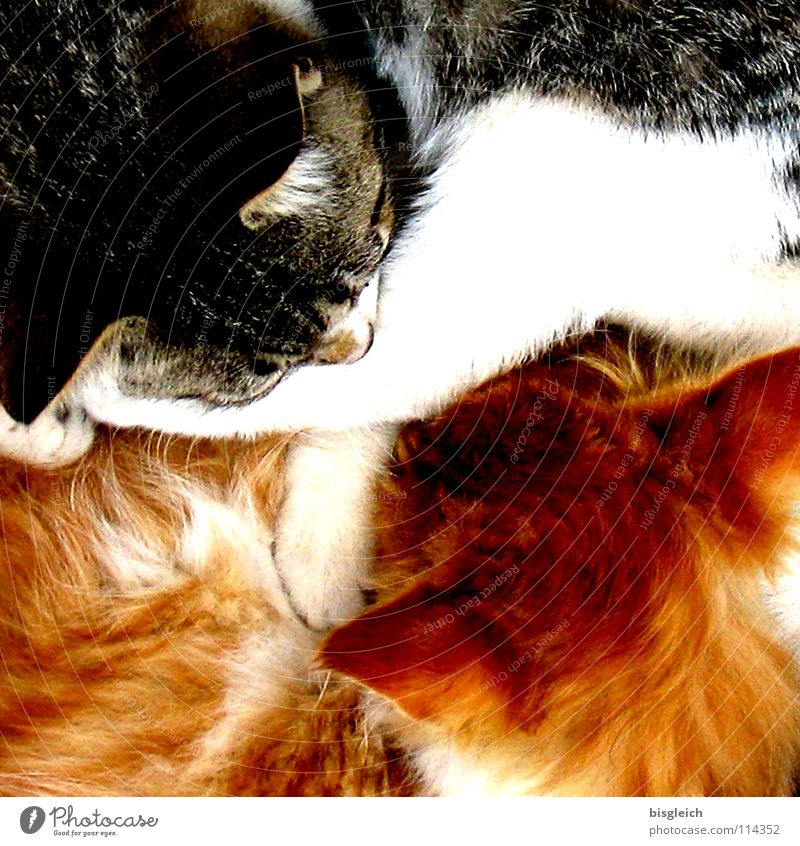 Ying & Yang Colour photo Detail Bird's-eye view Animal portrait Calm Pelt Pet Cat 2 Sleep Soft Safety (feeling of) Serene Peace Purr Cuddling Converse Velvety
