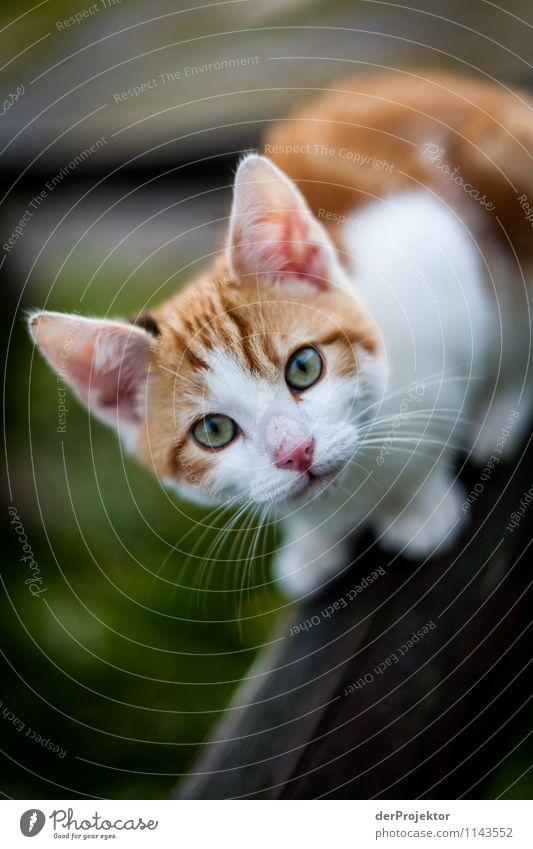 Cat Nature Beautiful Animal Environment Love Emotions Contentment Happiness Esthetic Joie de vivre (Vitality) Cool (slang) Kitsch Ear Trust Pet