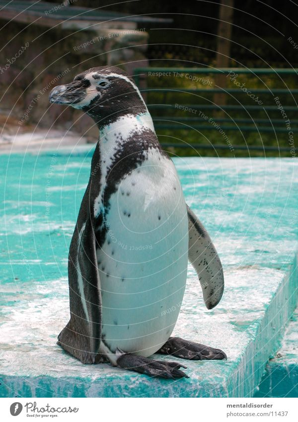 Water White Animal Winter Black Cold Style Ice Zoo Penguin North Pole Tails Suit Image type and genre