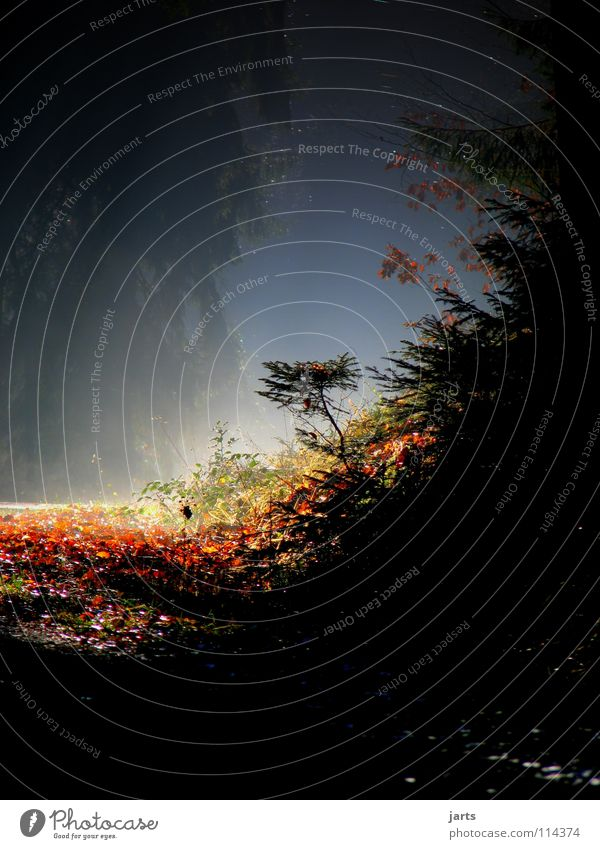 Tree Leaf Street Forest Autumn Lanes & trails Fear Fog Awareness Celestial bodies and the universe Bright spot
