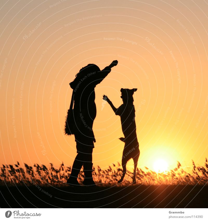 I'm as big as you are! Dog Woman Sunset Evening sun Back-light Silhouette Joy frende Lilly