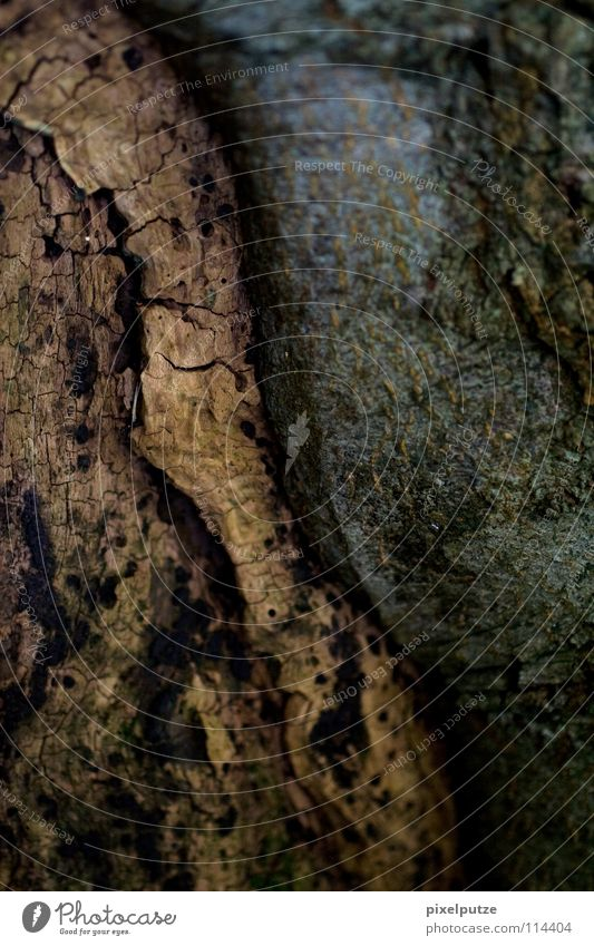balance Tree Tree bark Wood Wood flour Old Experience Tree trunk Continuity Yin and Yang Cork Macro (Extreme close-up) Close-up Earth Sand Contrast
