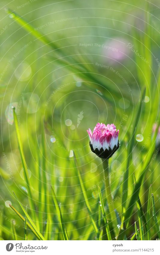 Pink makes you feel good! Nature Spring Summer Beautiful weather Flower Grass Blossom Park Meadow Fragrance Friendliness Happiness Fresh New Positive Crazy