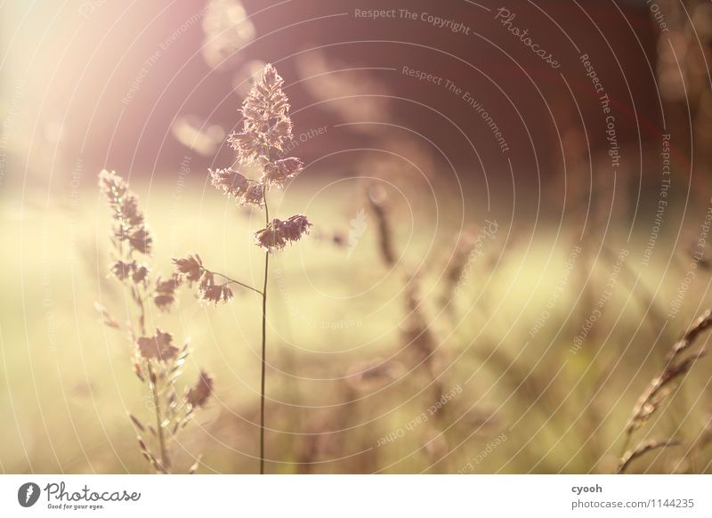 Nature Plant Summer Calm Warmth Life Meadow Happy Time Freedom Moody Brown Bright Contentment Field Illuminate