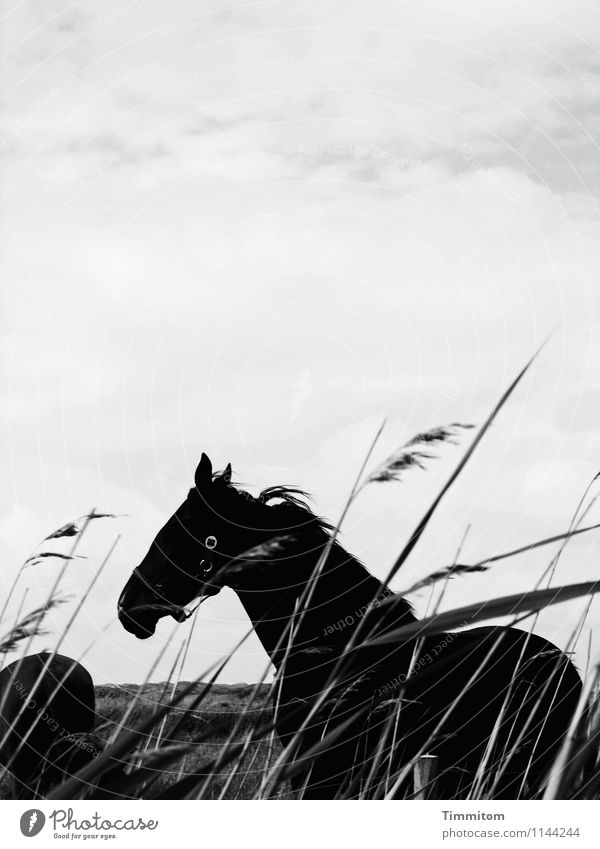 Sky Nature Vacation & Travel Plant White Landscape Clouds Animal Black Environment Emotions Natural Stand Simple Horse Denmark