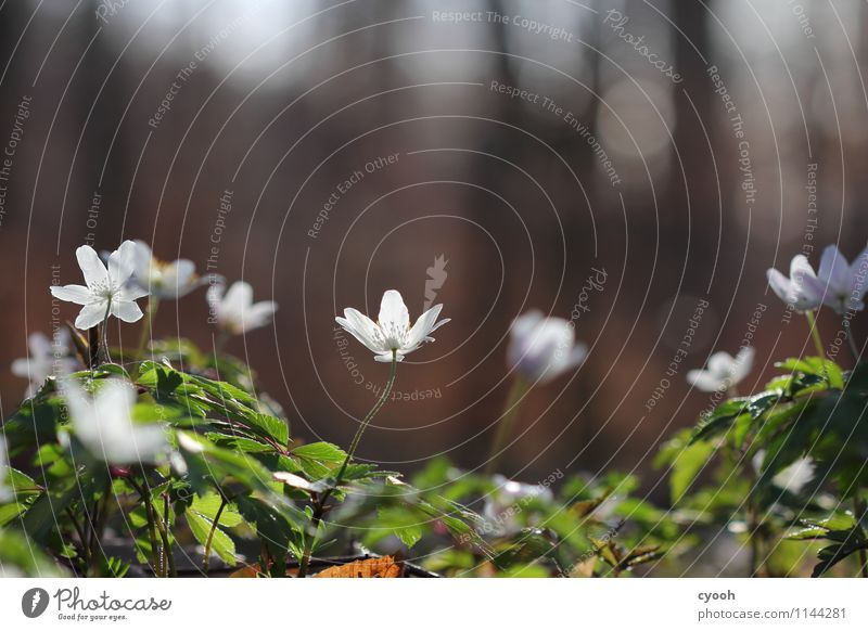 SPRING MESSENGERS Nature Spring Beautiful weather Plant Flower Blossom Forest Blossoming Fragrance Illuminate Growth Fresh Bright New White Spring fever