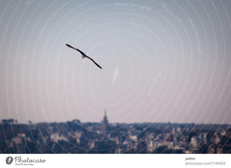 single pilot. Elegant Hunting Environment Nature Landscape Air Ocean Atlantic Ocean Port City Skyline Animal Bird Wing Seagull 1 Flying Infinity Maritime Ease