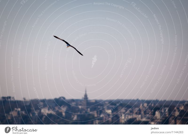 Sky Nature Ocean Landscape Animal Far-off places Environment Flying Bird Air Elegant Perspective Wing Infinity Skyline Seagull