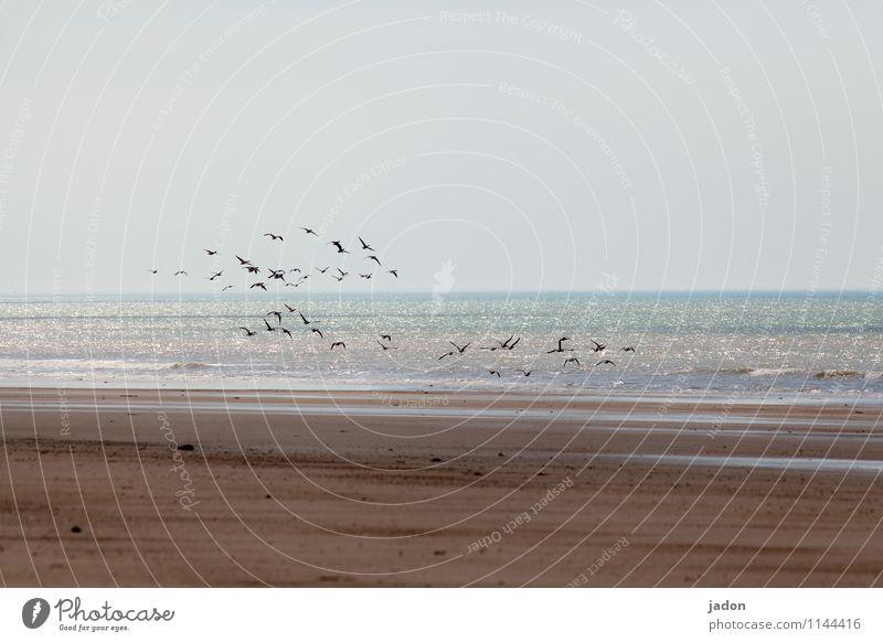 Sky Nature Ocean Landscape Animal Beach Far-off places Environment Coast Flying Bird Sand Earth Horizon Wild Elegant