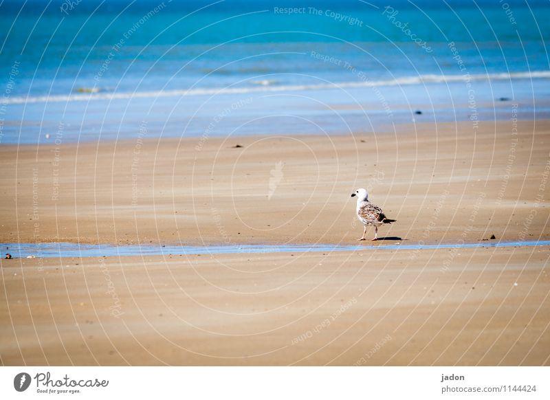 seagull and sea. Harmonious Beach Ocean Waves Nature Landscape Sand Spring Coast Atlantic Ocean Animal Bird Seagull 1 Observe Looking Free Maritime Blue