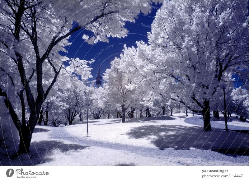 Sky White Tree Blue Meadow Lawn Bushes Munich Bavaria Infrared Infrared color Olympic Park Olympic Tower