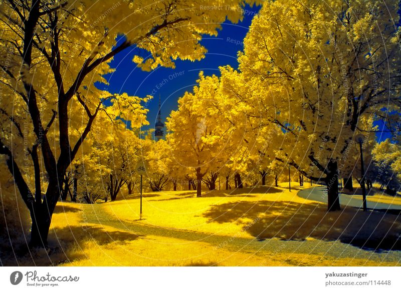 Sky Tree Blue Summer Yellow Meadow Lawn Bushes Climate Munich Traffic infrastructure Drought Bavaria Infrared Infrared color Olympic Park