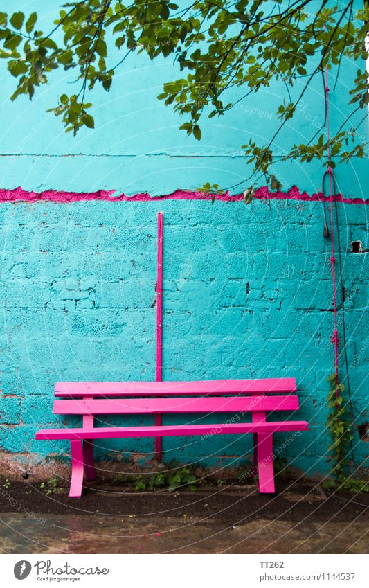 bank robbery Wall (barrier) Wall (building) Garden Sit Blue Multicoloured Green Pink Flashy Magenta Cyan Bench Colour photo Exterior shot Copy Space top Day